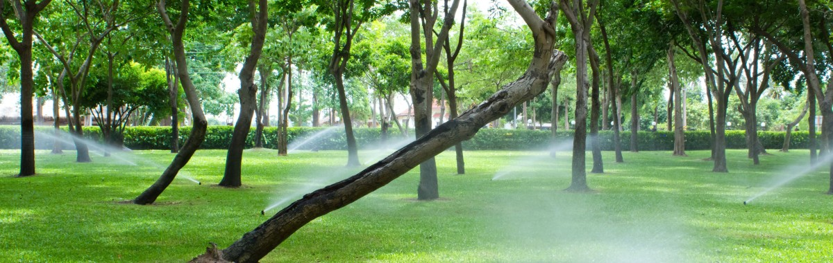 Green lawn with trees and sprinklers running